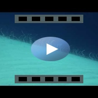 Garden eels - HD video