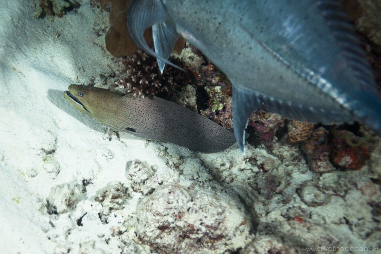 Jack fish hunt Moray